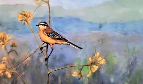 Vogelvlucht (gele kwikstaart)