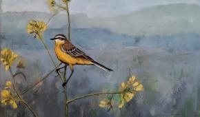Yellow bird(gele kwikstaart) 50x 50 cm 350 euro
